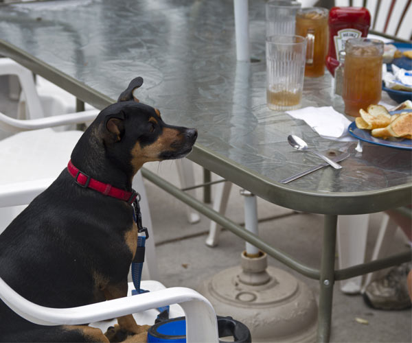 dog at a table