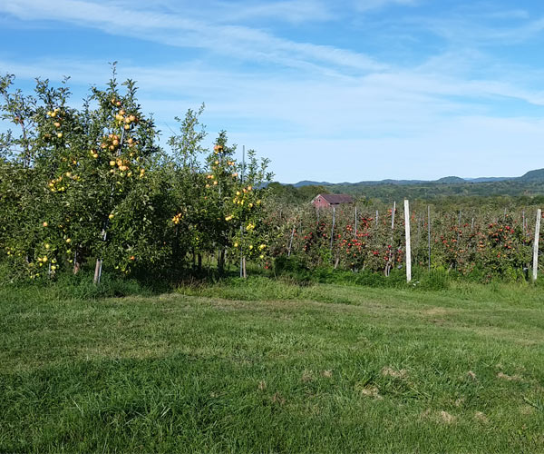 apple orchard in saratoga