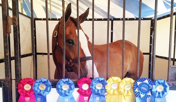 horse with award ribbons