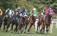 horses racing on grass