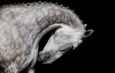 artistic photograph of a horse by tracey buyce