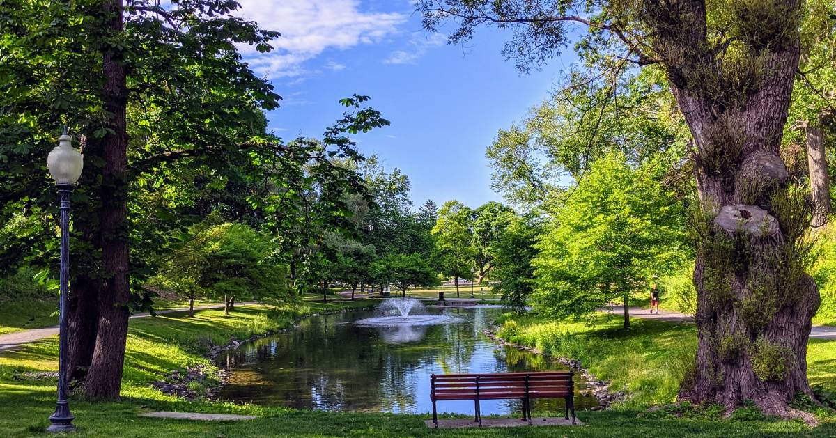 bench in park by pond