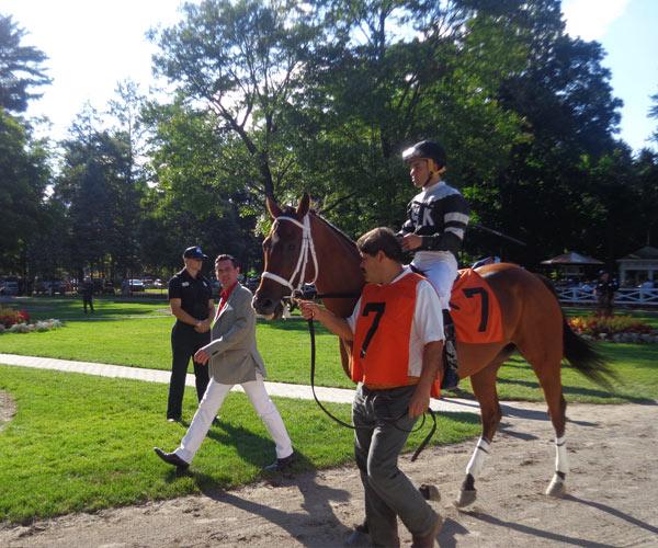 horse at saratoga
