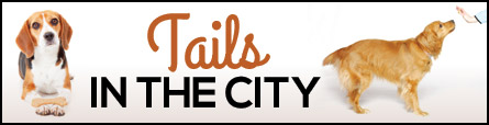 Tails In The City: A Saratoga Dog Training Blog