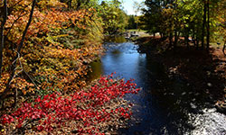 red and orange foliage surrounding a lake