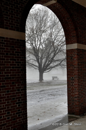 fog (4).jpg