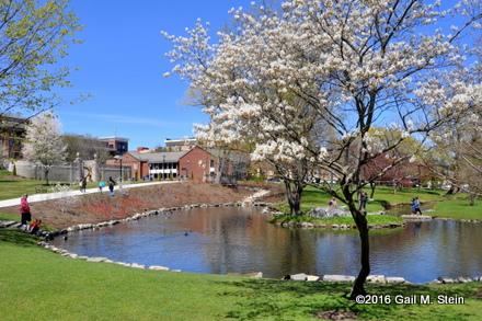 spring (3).jpg