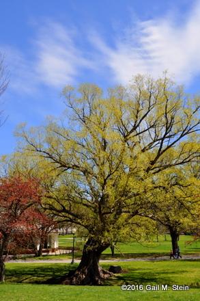 spring (8).jpg