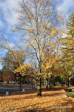 autumn11-001.jpg