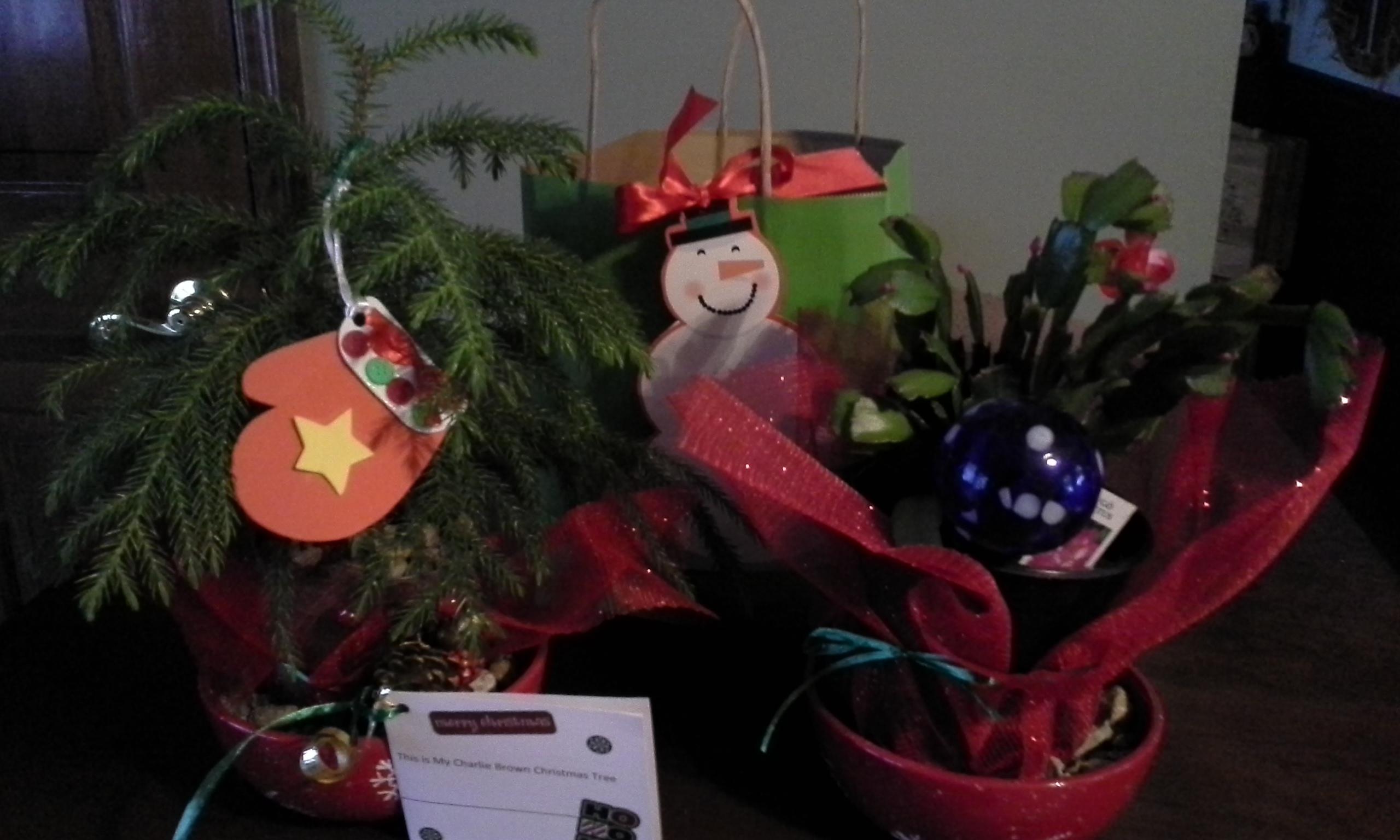 plants for Christmas.jpg