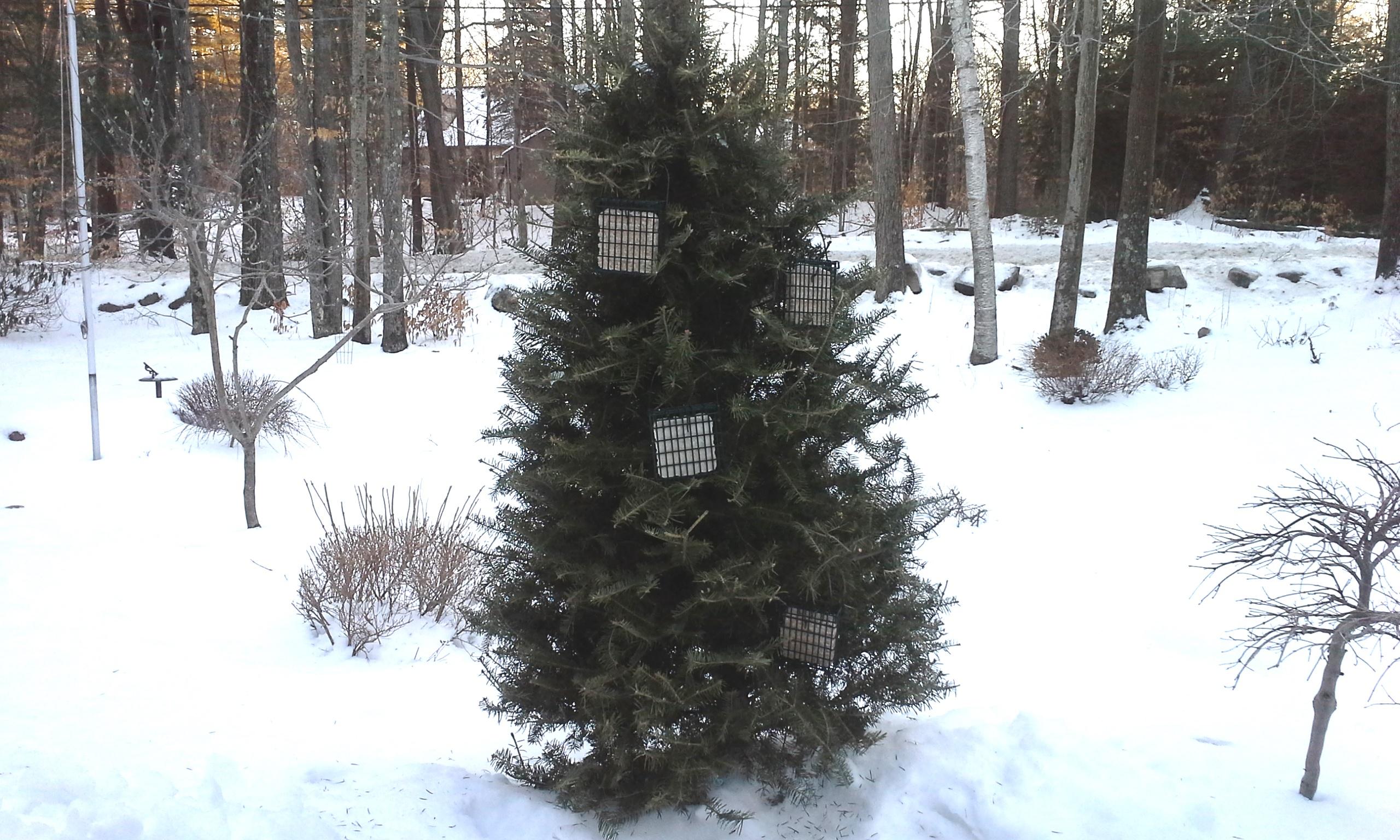 birds in the winter garden garden goddess sense and
