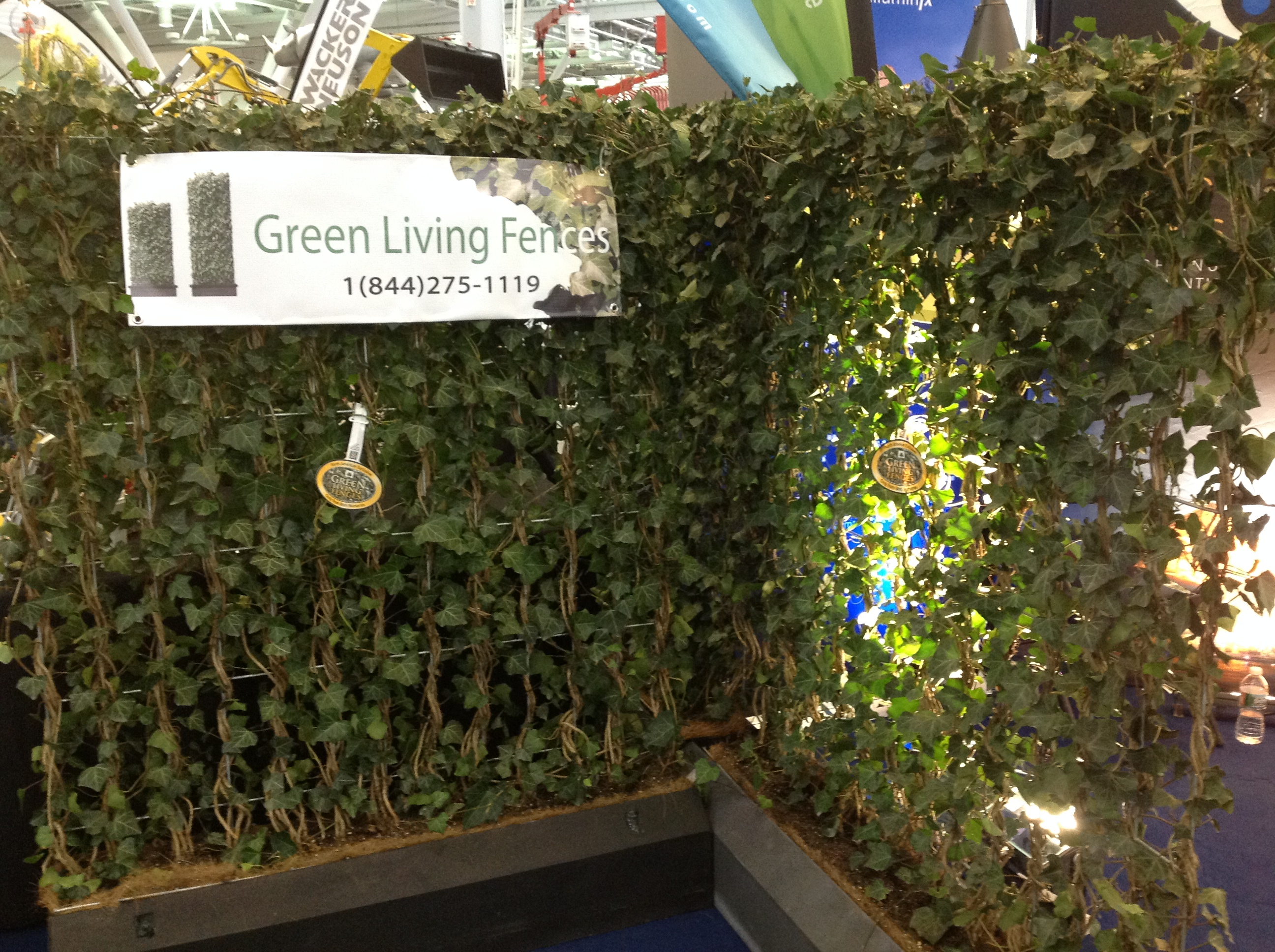 Green Living Fences: An Alternative to Arbor Vitae Soldiers ...
