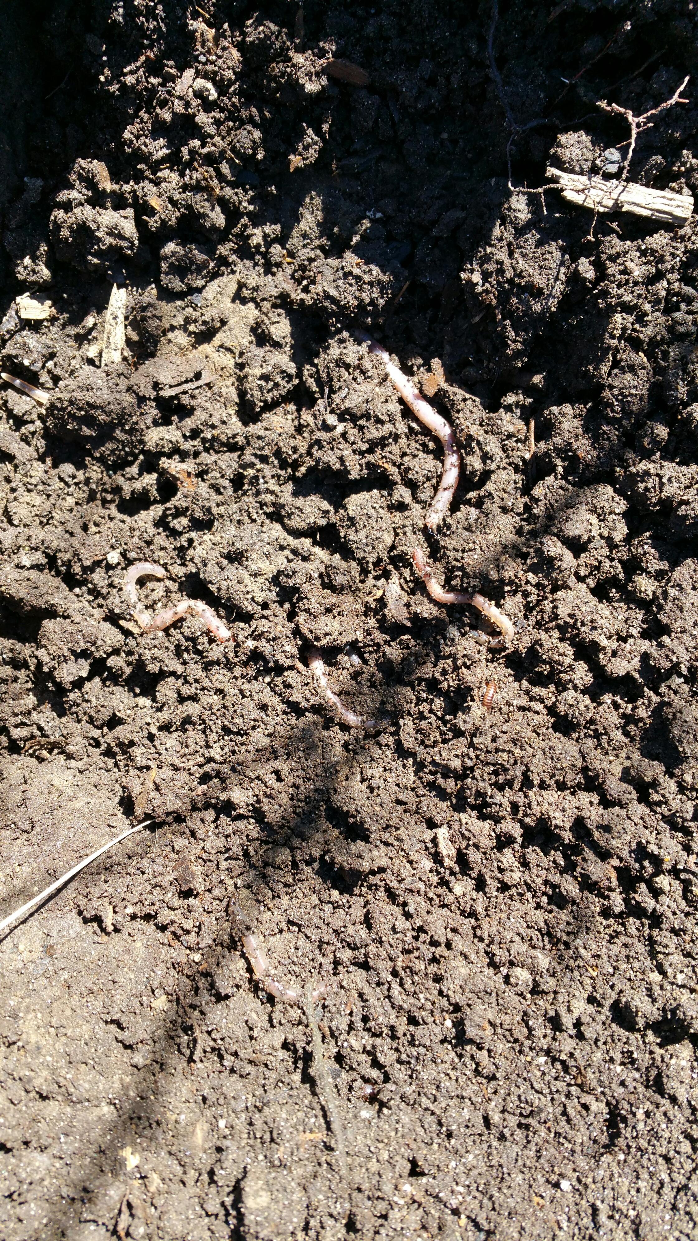 mulch decomp.jpg