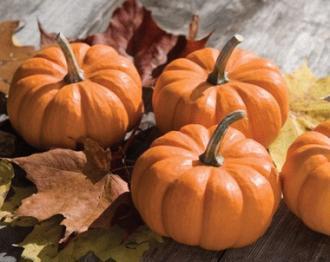 pumpkin202-thumb-330x262-27598.jpg