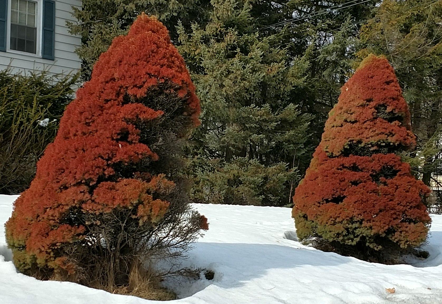 sun scald alberta - Garden Goddess Sense and Sustainability: A ...
