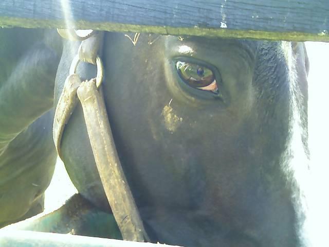 Williamstown's Eye.jpg