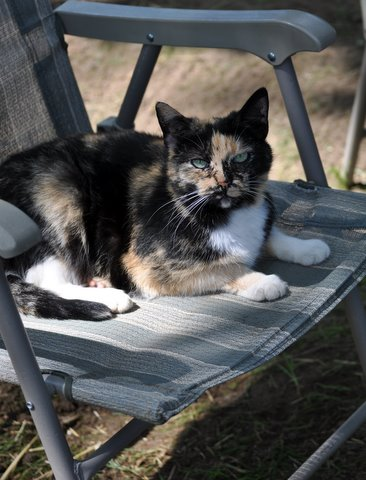 Patches the Barn Cat Joe Aquilinos.JPG