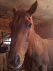 Easy Street Horse Rescue Faith aka Buddy.jpg