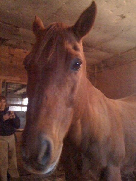 Easy Street Horse Rescue Faith aka Buddy.jpg
