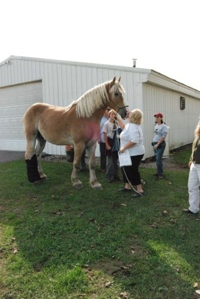 Easy Street Horse Rescue Nina Kissing Thor.JPG