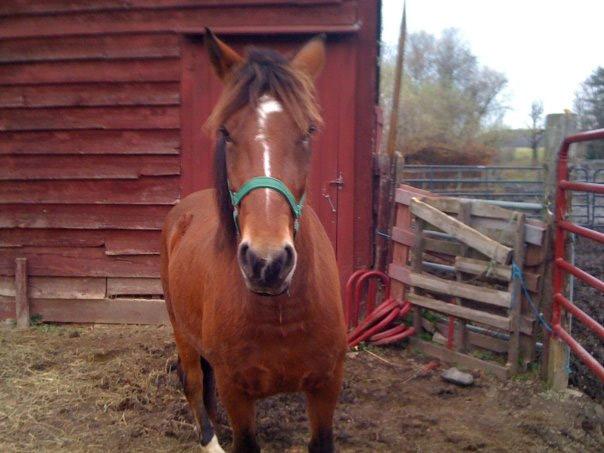 easy-street-horse-rescue-deheya