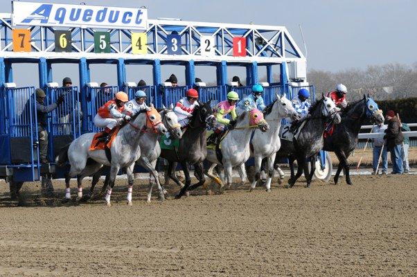 NYRA Arromanches Gray Roan Horse Race 2010.jpg