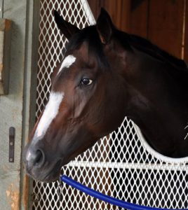 Rachel Alexandra Beautiful Head Shot Cathy Duffy.JPG
