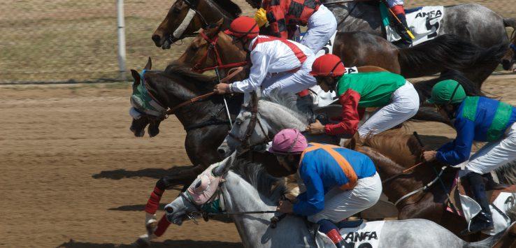 Equicurean ARABIAN HORSES RACING Credit Mats Genberg.jpg