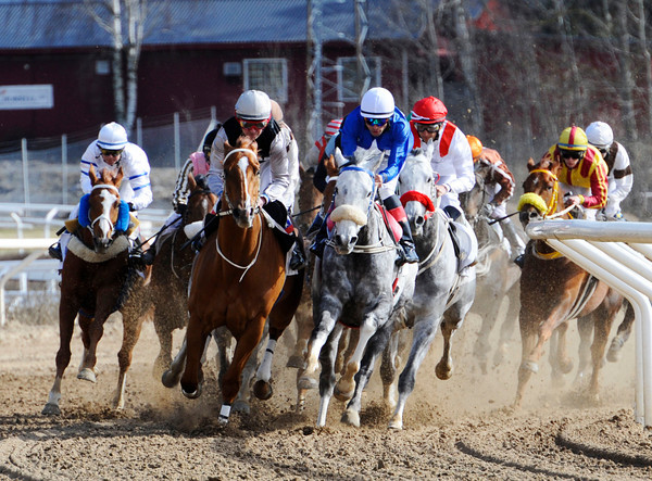 EQUICUREAN Svensk Galopp Photo 4.png