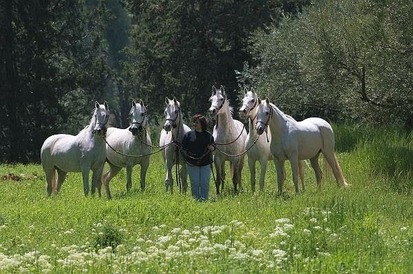 PRINCESS ALIA FOUNDATION Alia with Six Arabians.JPG