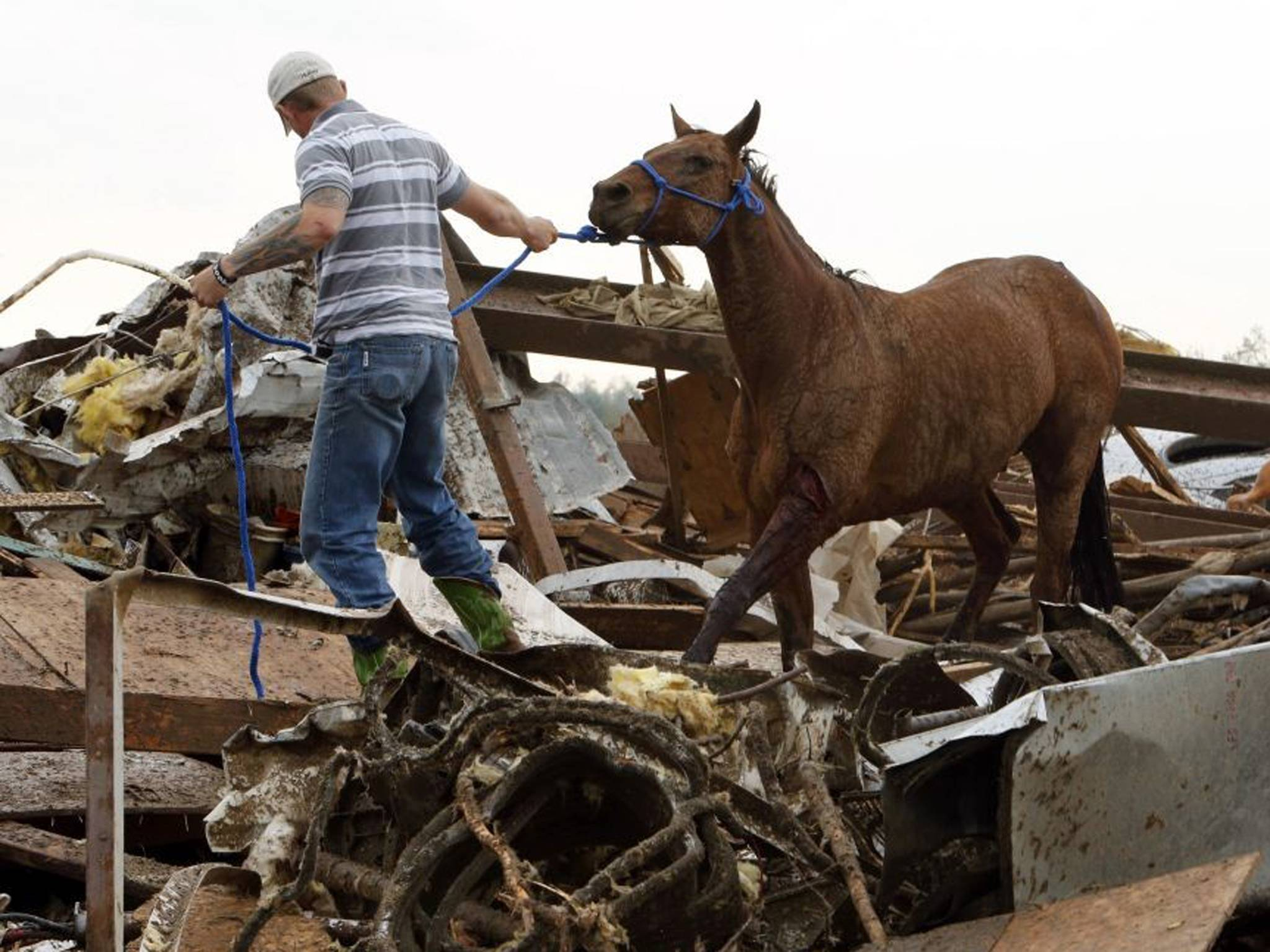 Oklahoma Celestial Acres Horse Alive.jpg
