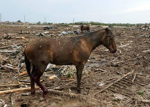 Saddest Horse Ever OK.jpg