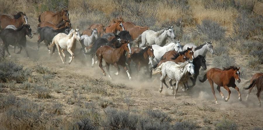 WILD HORSE PHOTOS BY FRANK STAUB.jpg
