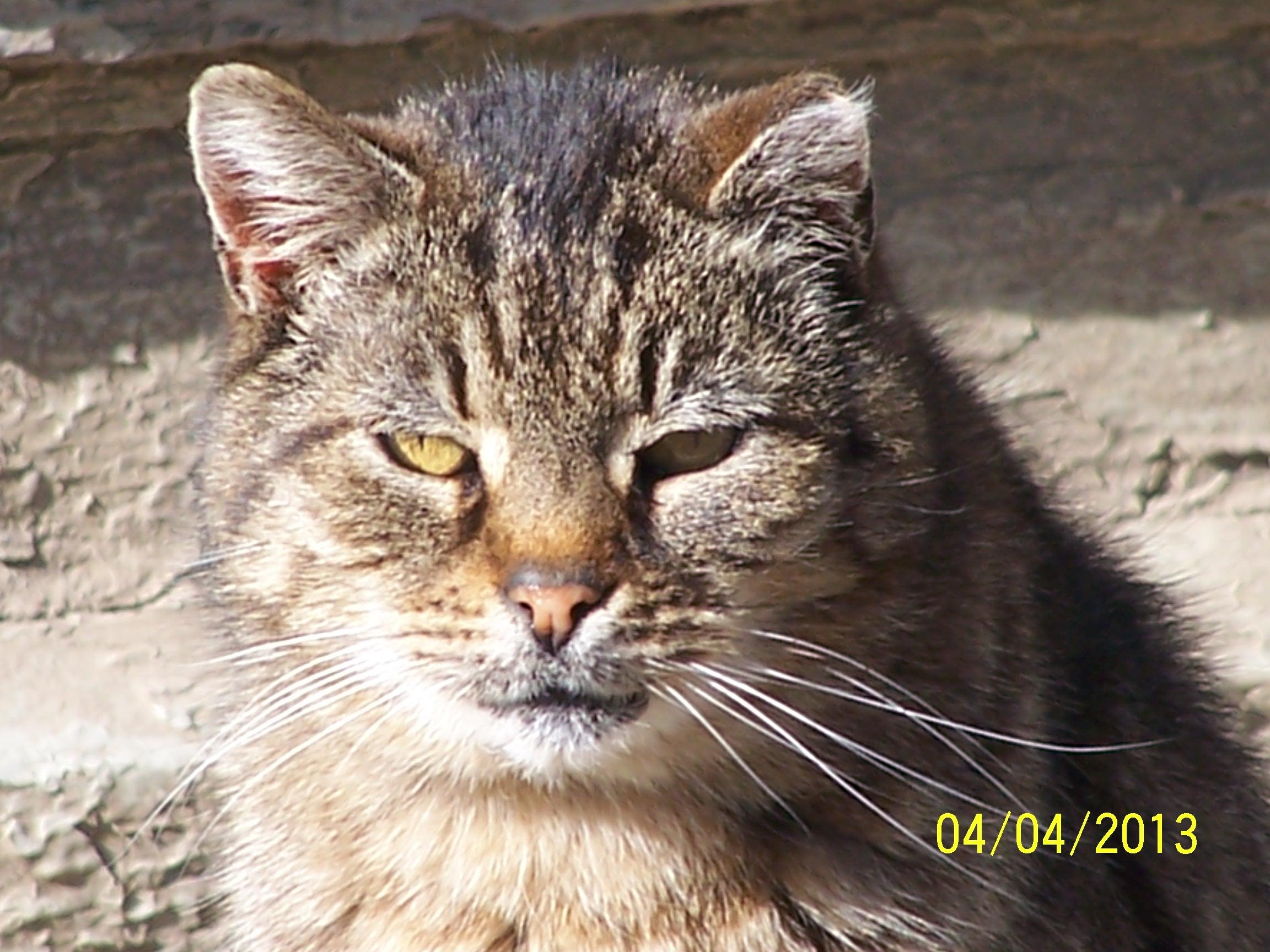 Quaintance Kitty 1.JPG