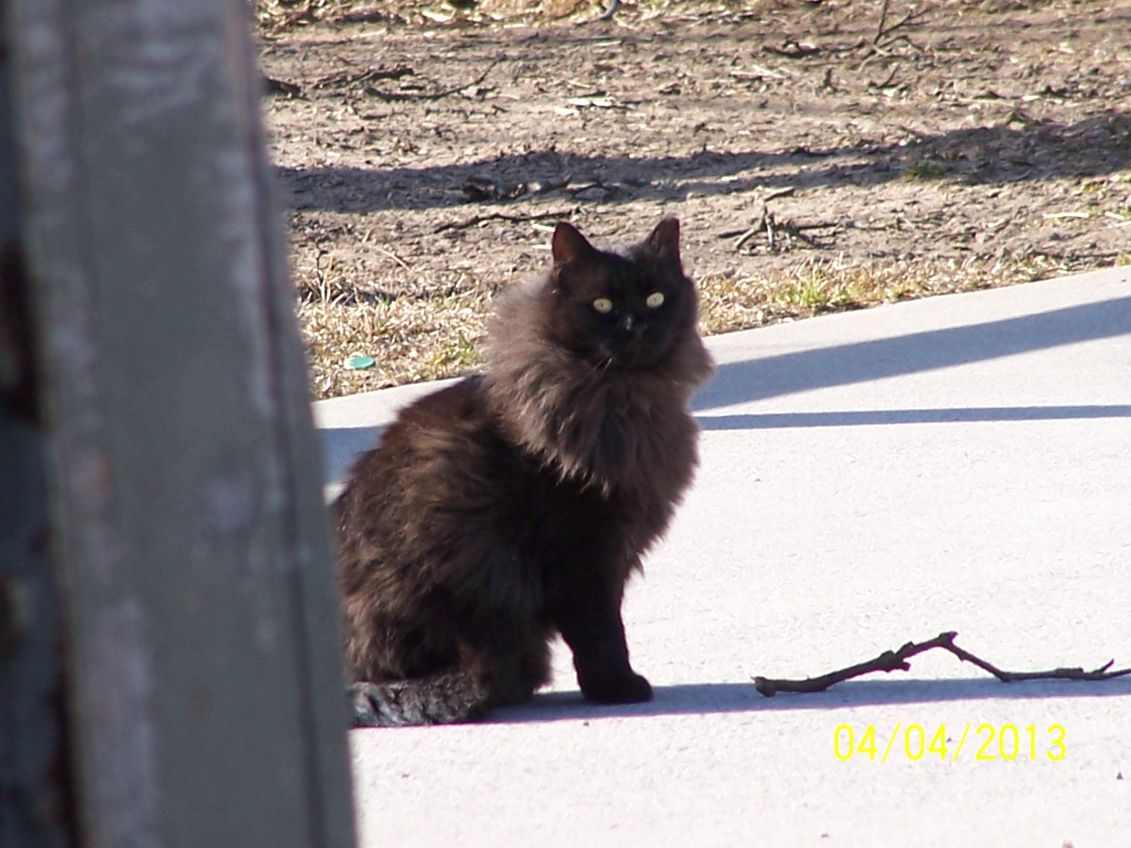 Quaintance Kitty 2.JPG