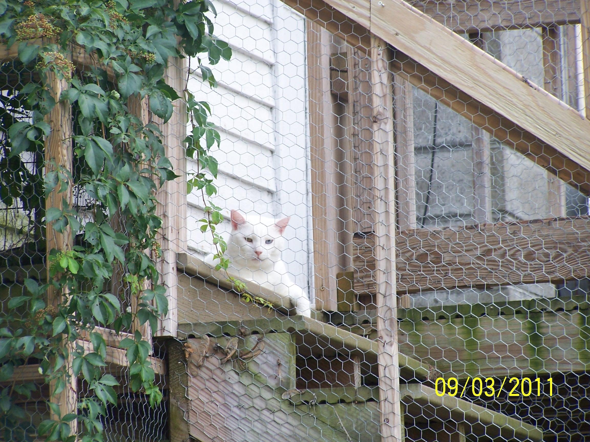 Quaintance Kitty 3.JPG
