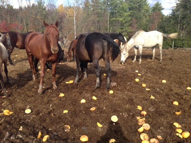 Sad Horses 3.JPG