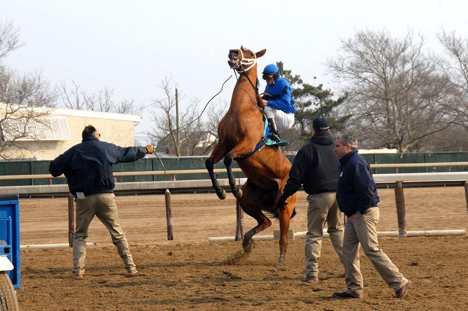 DAN HEARY Rearing Horse 1.jpg