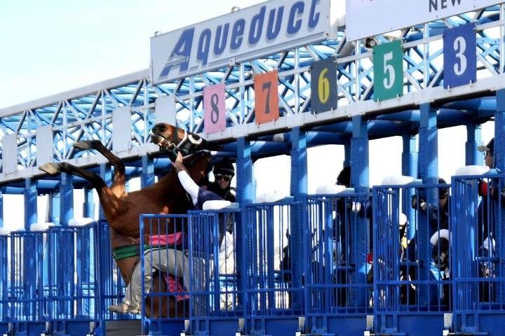 DAN HEARY Rearing Horse Big A.jpg