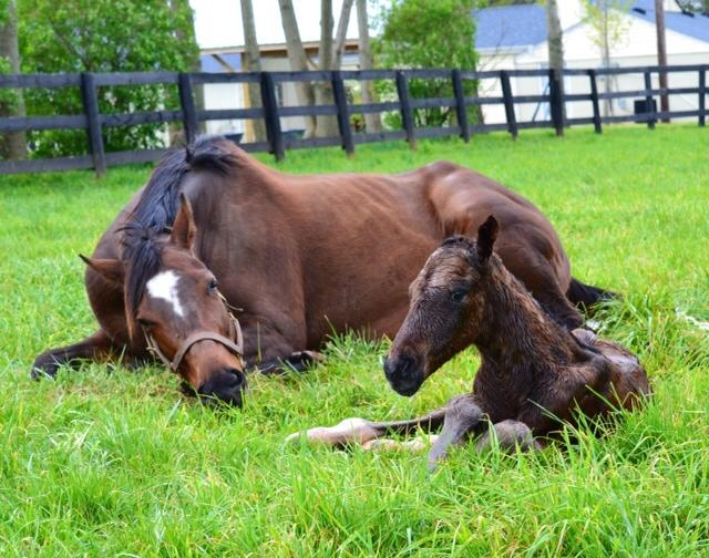 Mommy and Her New Baby Timber Town Stable.jpg