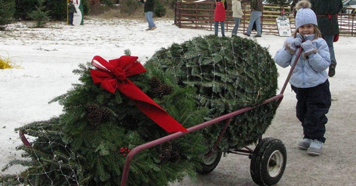 christmas tree on a cart