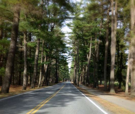 avenue of the pines saratoga