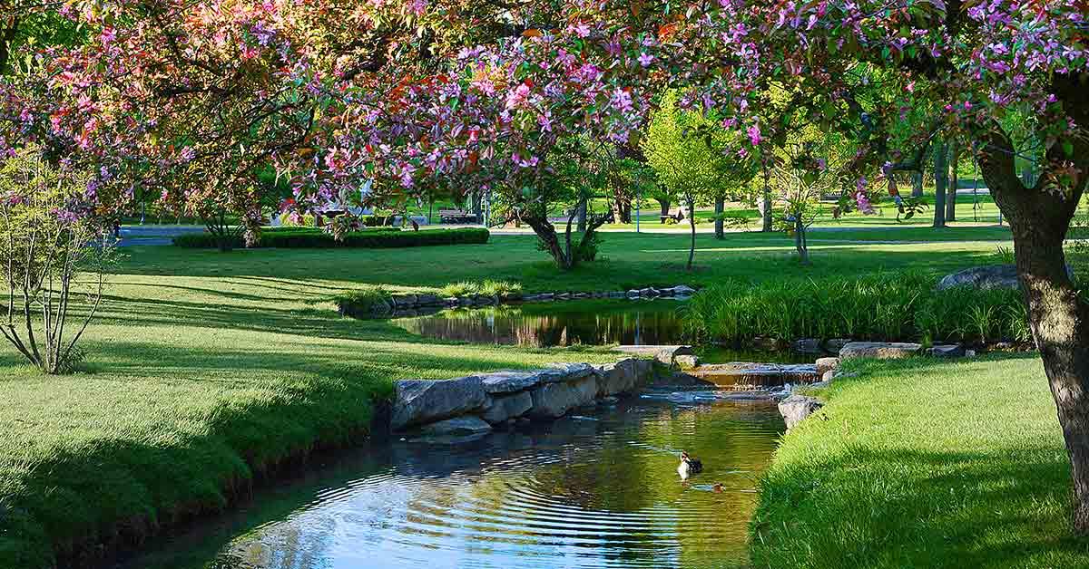 river in a large public park