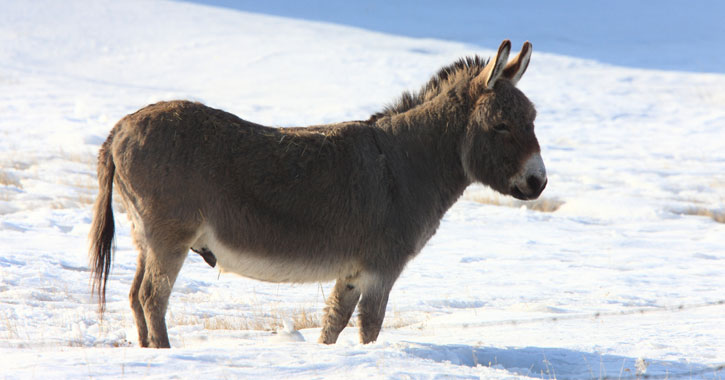 a donkey standing in the snow - Dominic The Christmas Donkey