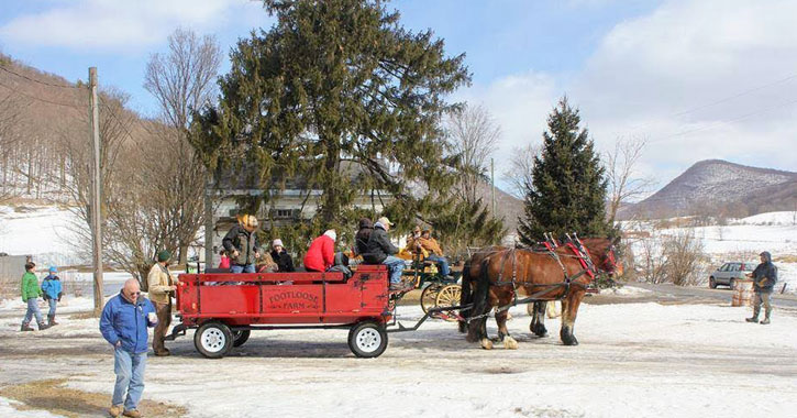 people taking a horse-drawn wagon ride