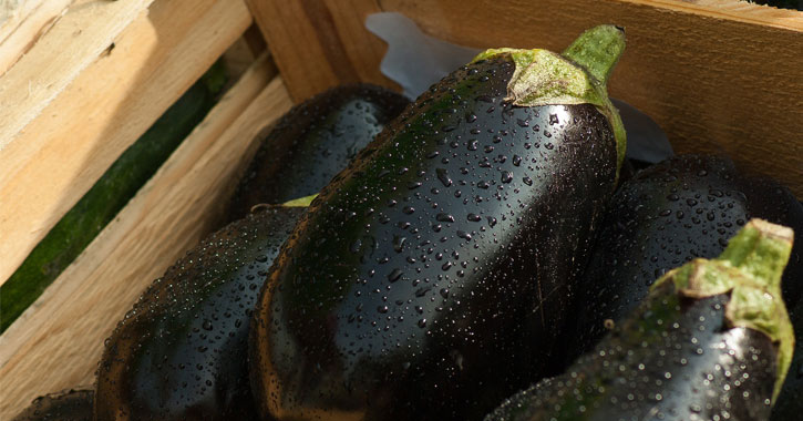eggplants with dew on them in a crate