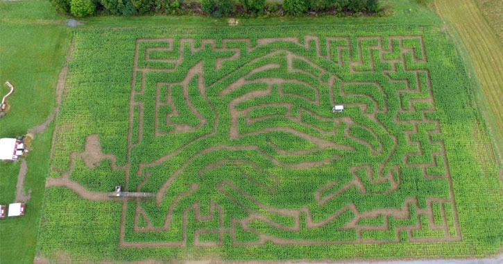 aerial view of a huge corn maze