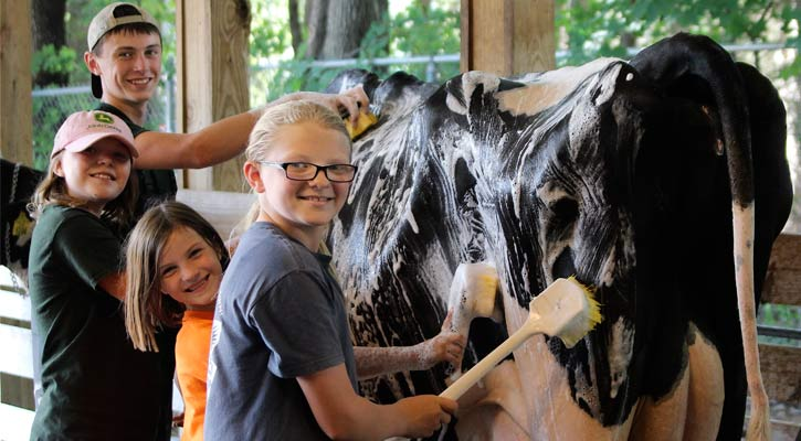 four kids washing a cow, with the back of the cow facing us