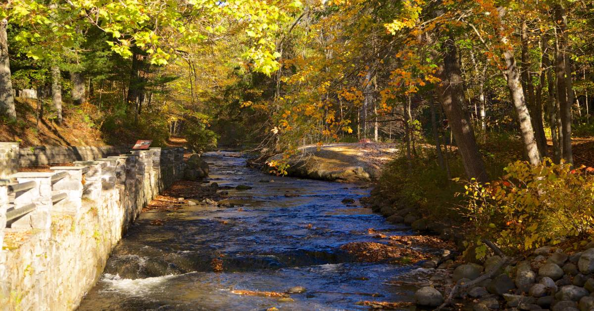 waterway near fall foliage on trees