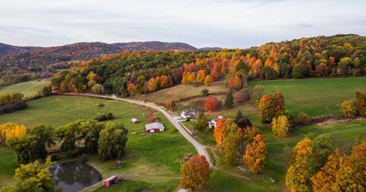 aerial view of autumn road